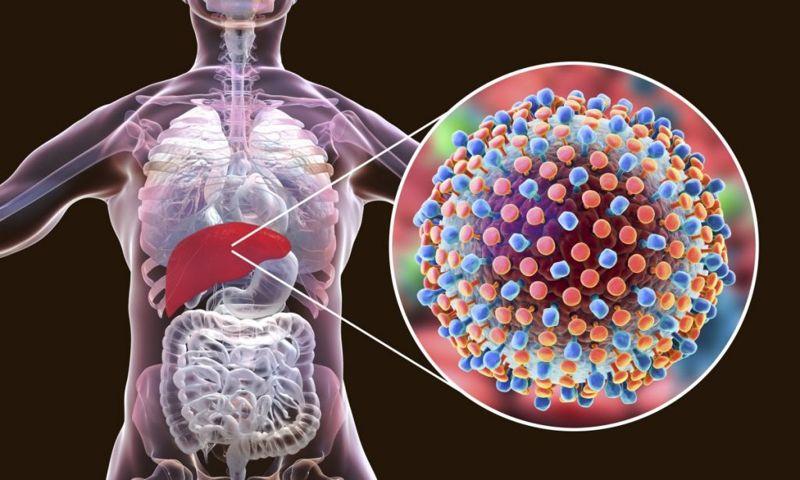 liver enzyme tests