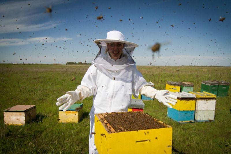 preventing Bee allergies