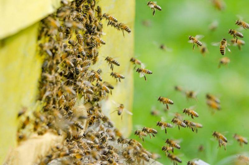 stings Bee allergies