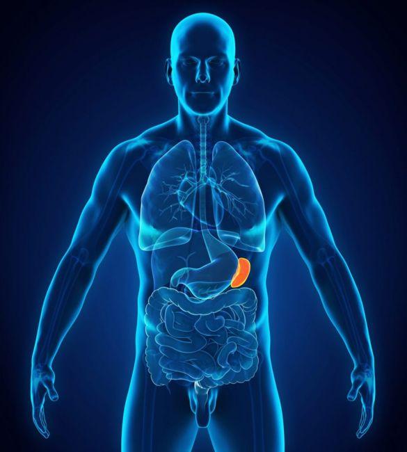 function of the spleen