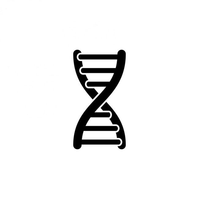 genes law of segregation