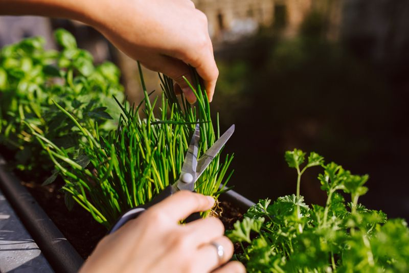 skin health benefits of chives