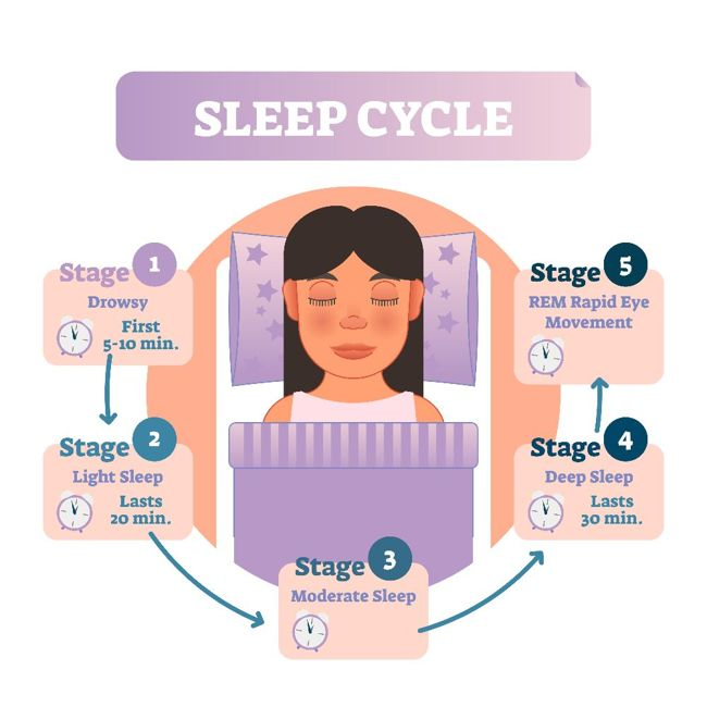 What is the Sleep Cycle?