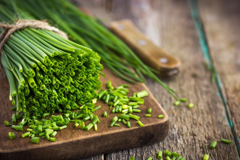 immune system chives