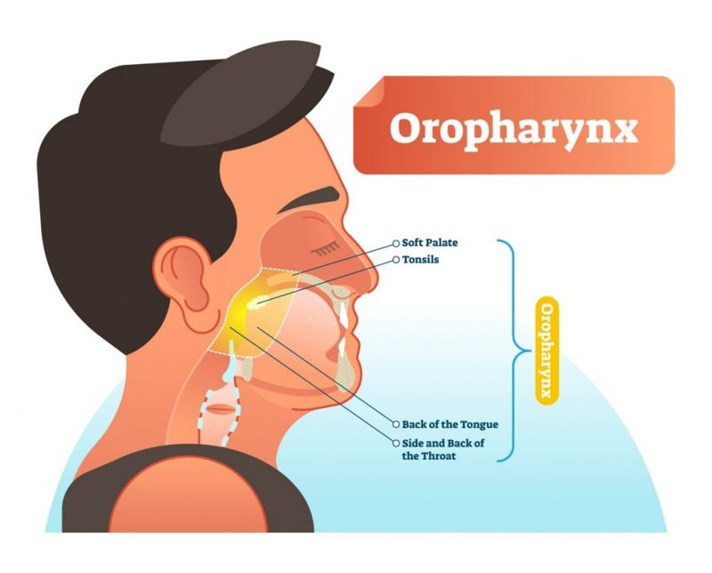 mouth The pharynx