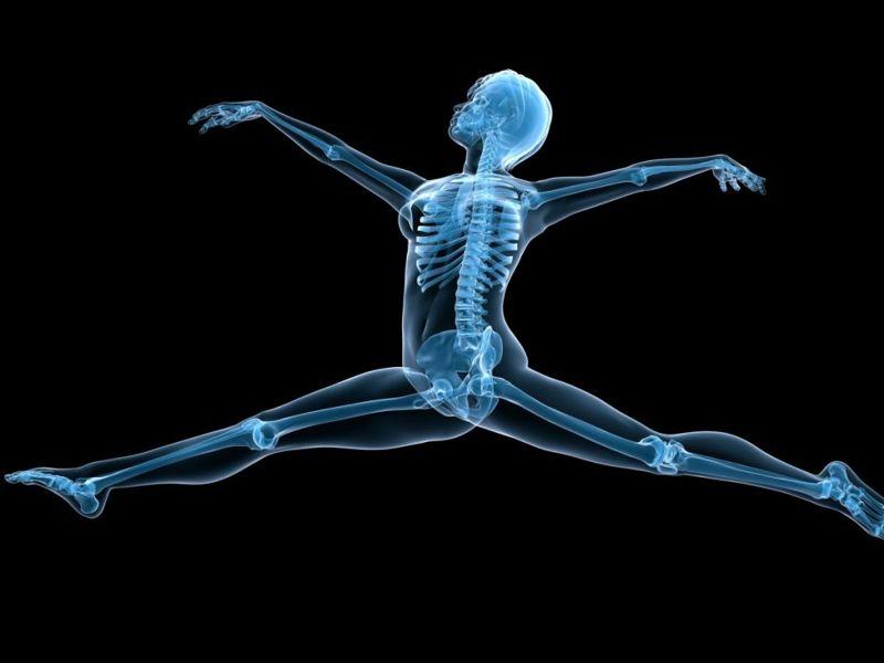skeletal system purpose