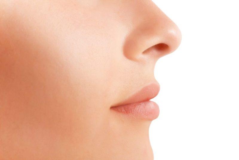 upper respiratory system