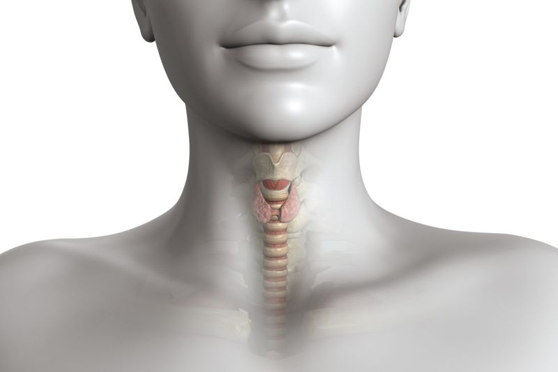 The Job of the Thyroid