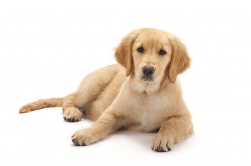 cute popular dog breeds