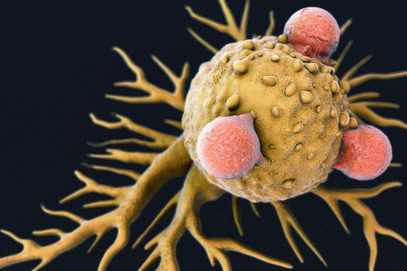 immune system, antioxidant, saponins, autoimmune
