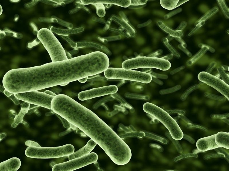 serotypes e. coli