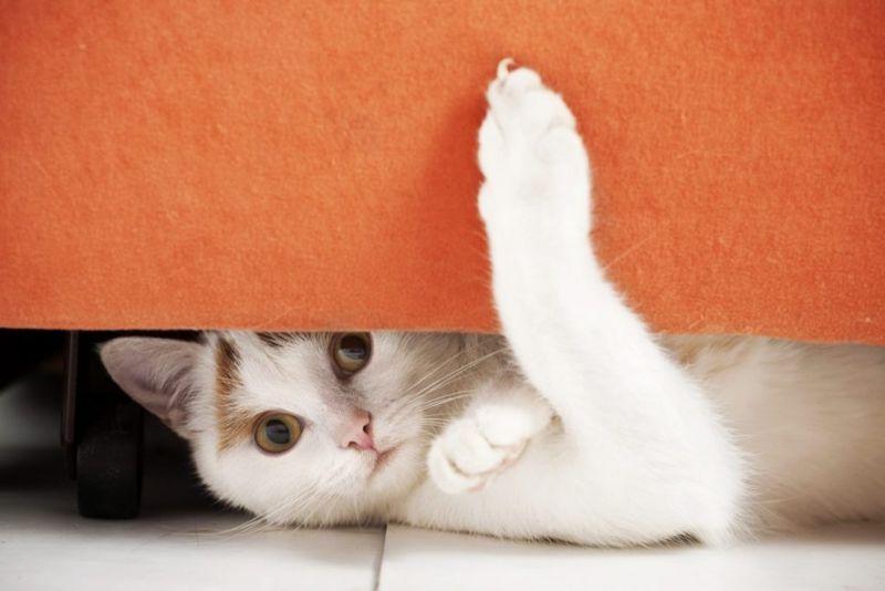 cat names disney