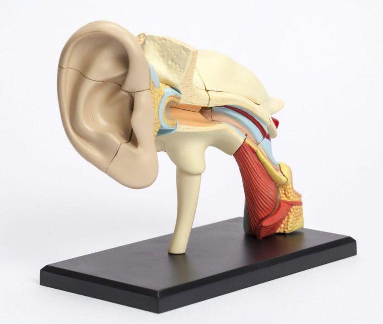 oral health The pharynx
