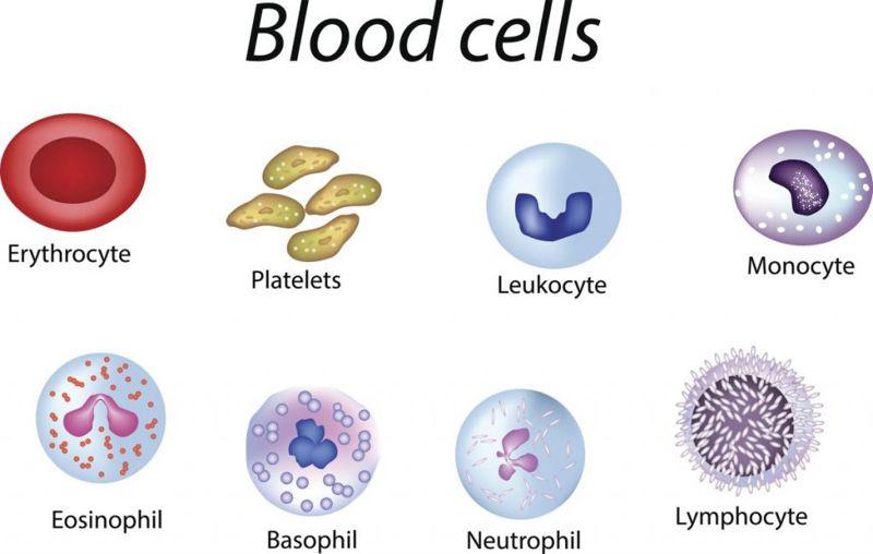 blood cells Spleen pain
