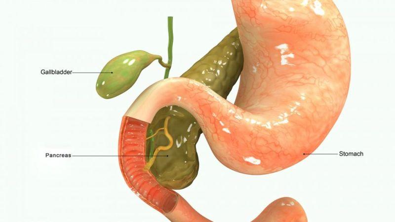 anatomy The gallbladder