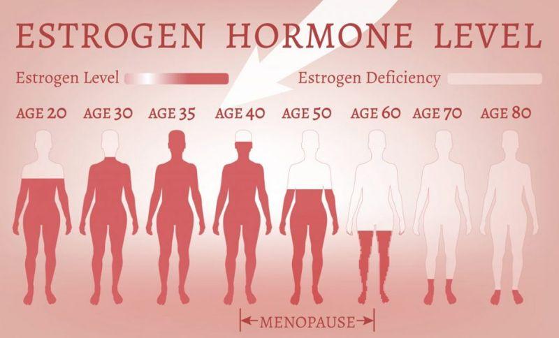 estrogen hormone female reproductive system
