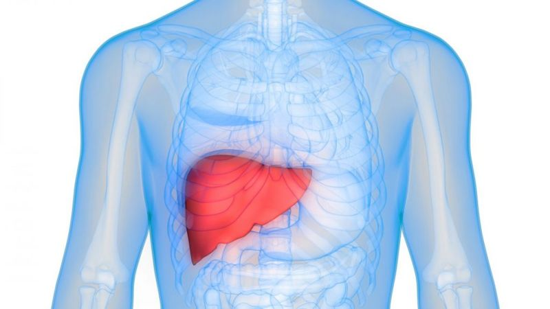 damage Hepatomegaly