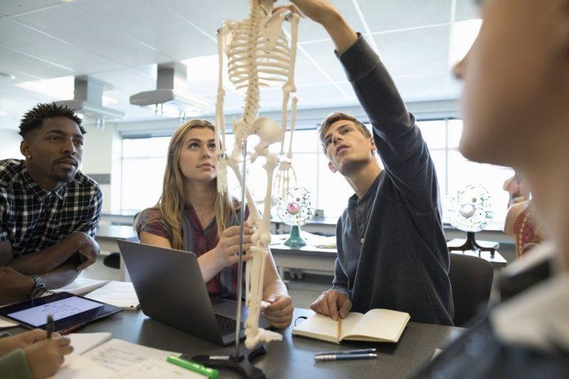 skeletal system bones