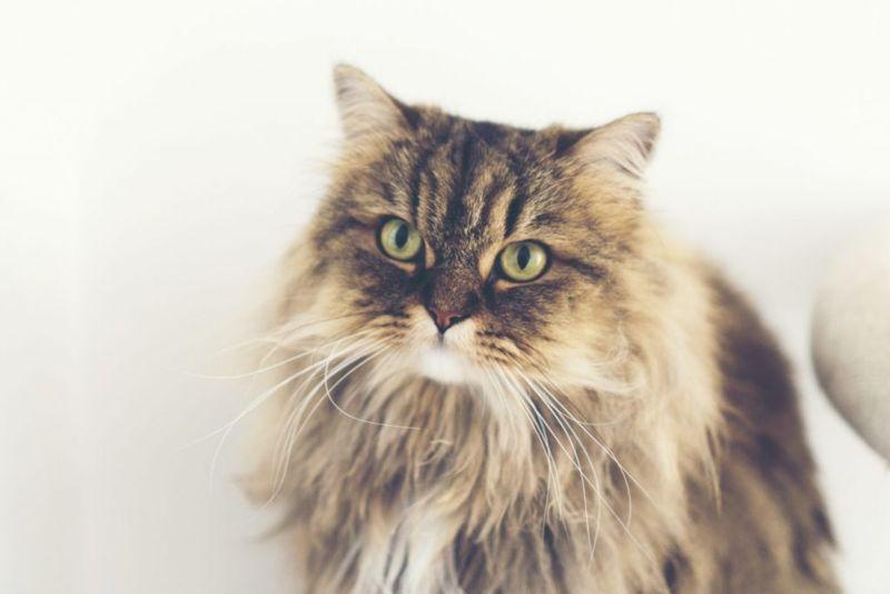 cat names inspiration