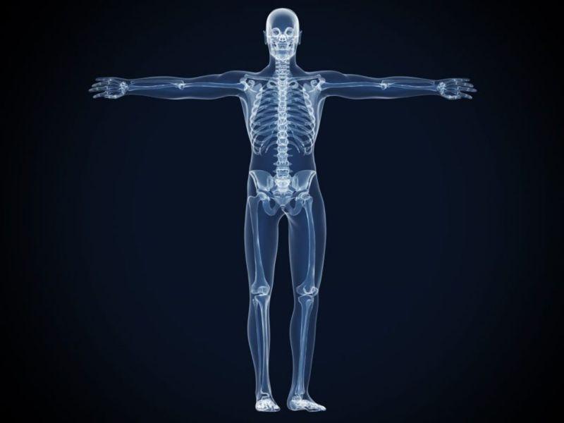 how many bones skeletal system