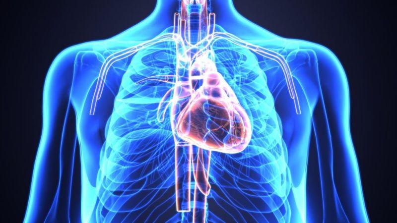 the heart disease