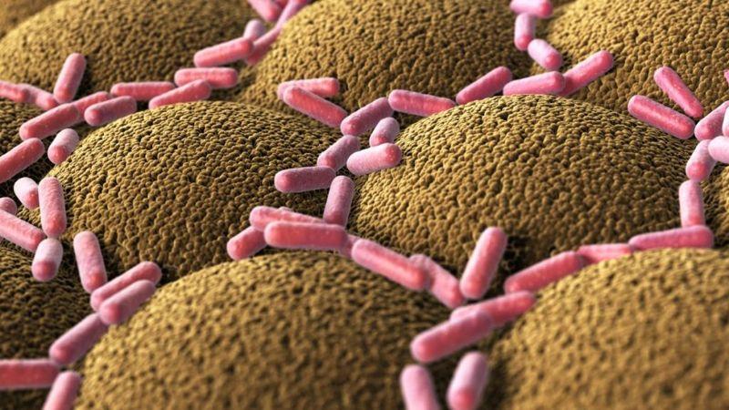 small intestine immune system