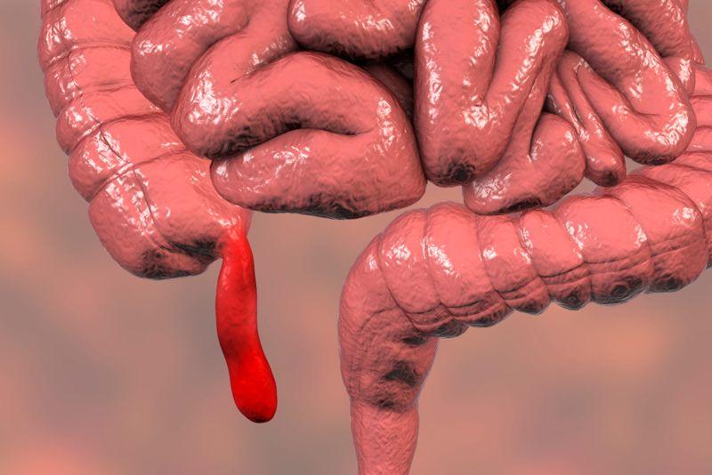 vestigial the appendix