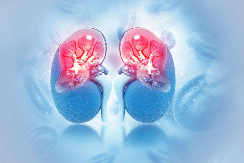 the kidneys healing