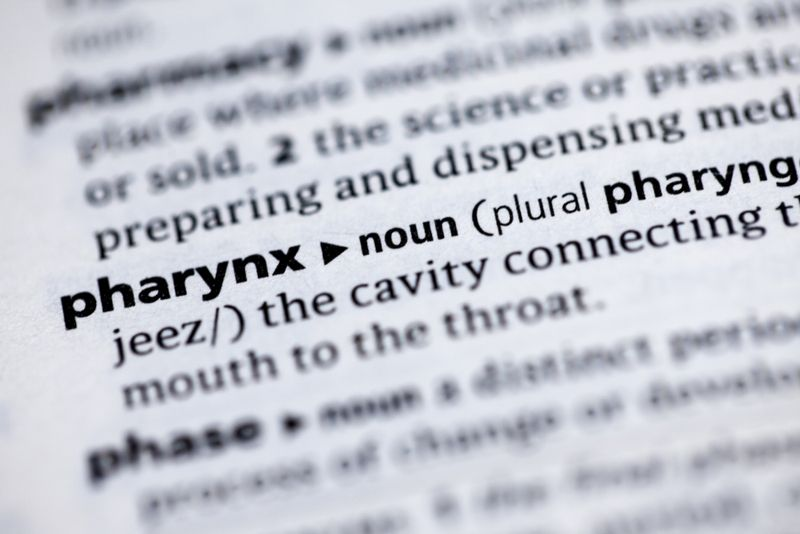 What is the Pharynx