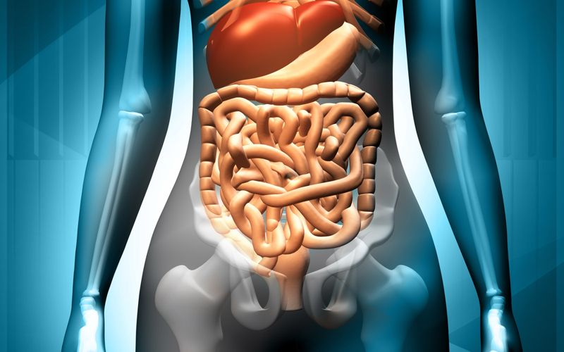 What Does the Excretory System Do?