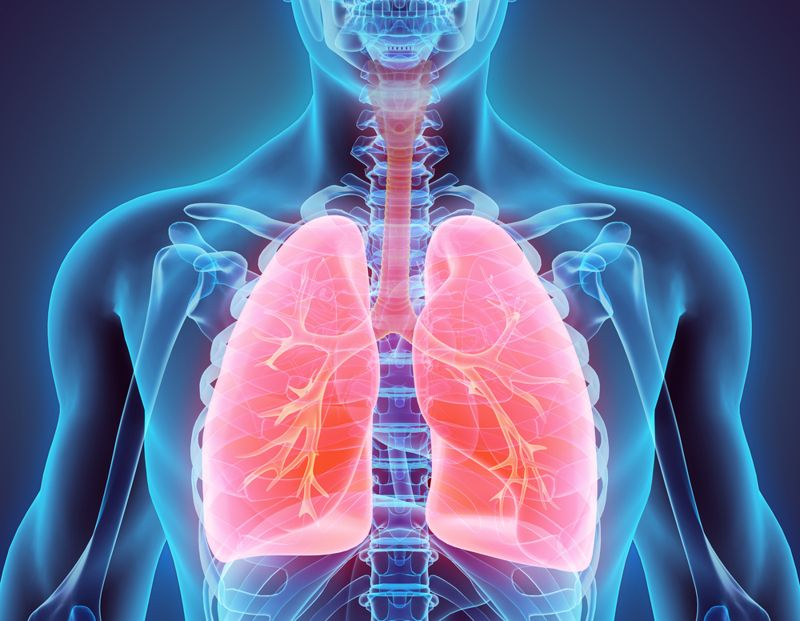 structure respiratory system