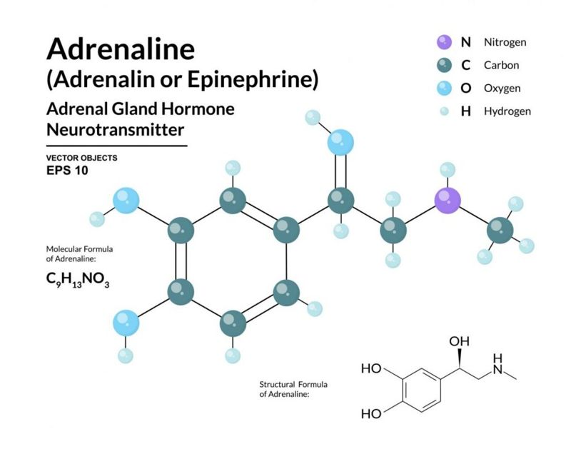 adrenaline Neurotransmitters