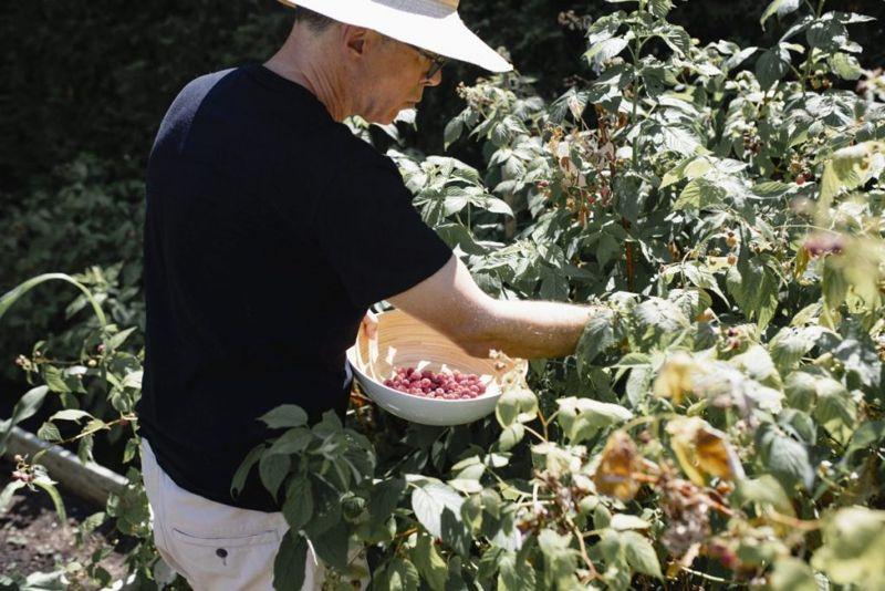 antioxidants raspberry leaf tea