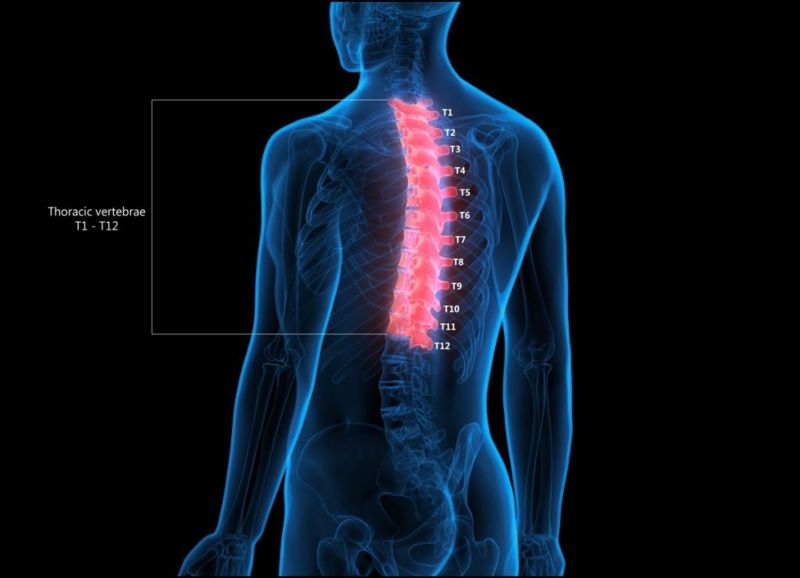 regions of spinal column