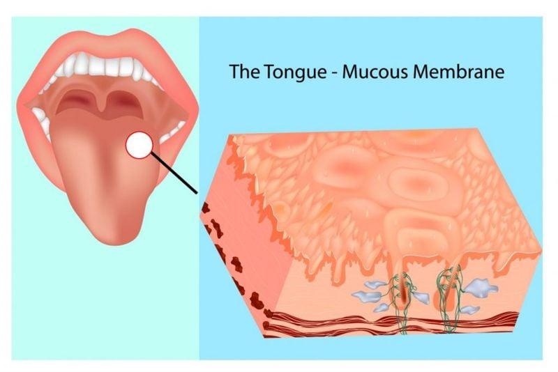 the tongue surface