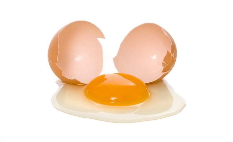 egg Protein powders