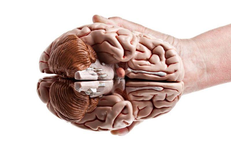 where is The cerebellum