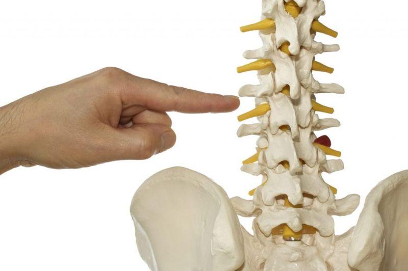 anatomy of spinal column