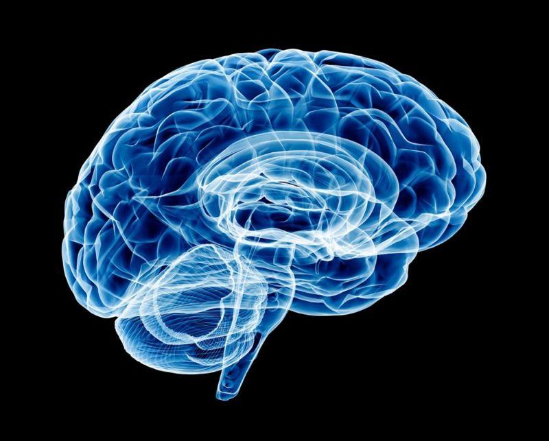 serotonin levels brain