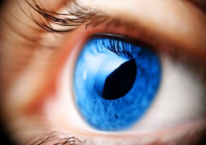 iris parts of the eye