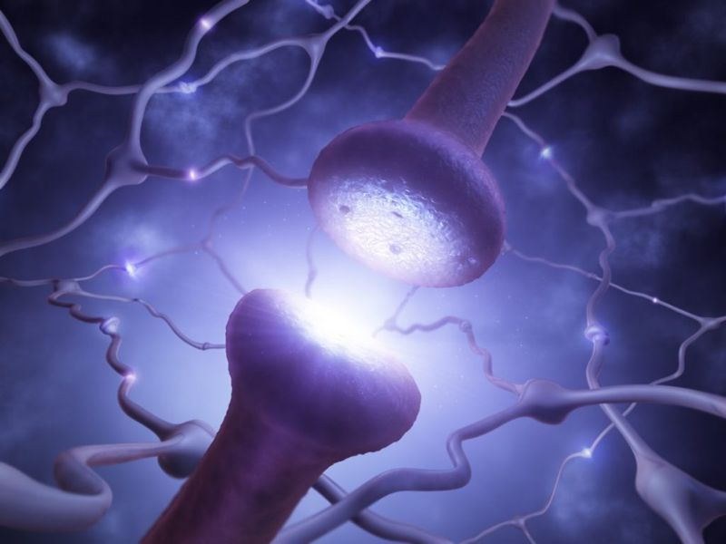 synapses memory neuronal-connections learning
