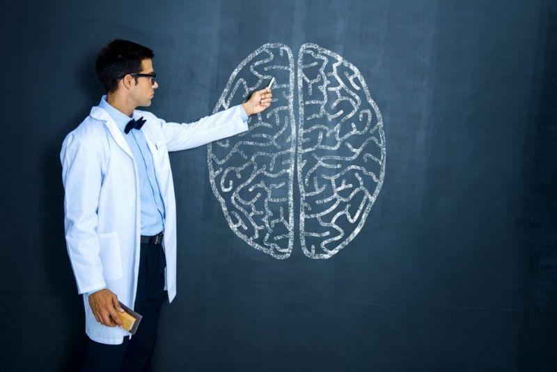 anatomy of The cerebrum brain