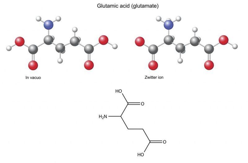 glutamic acid Neurotransmitters