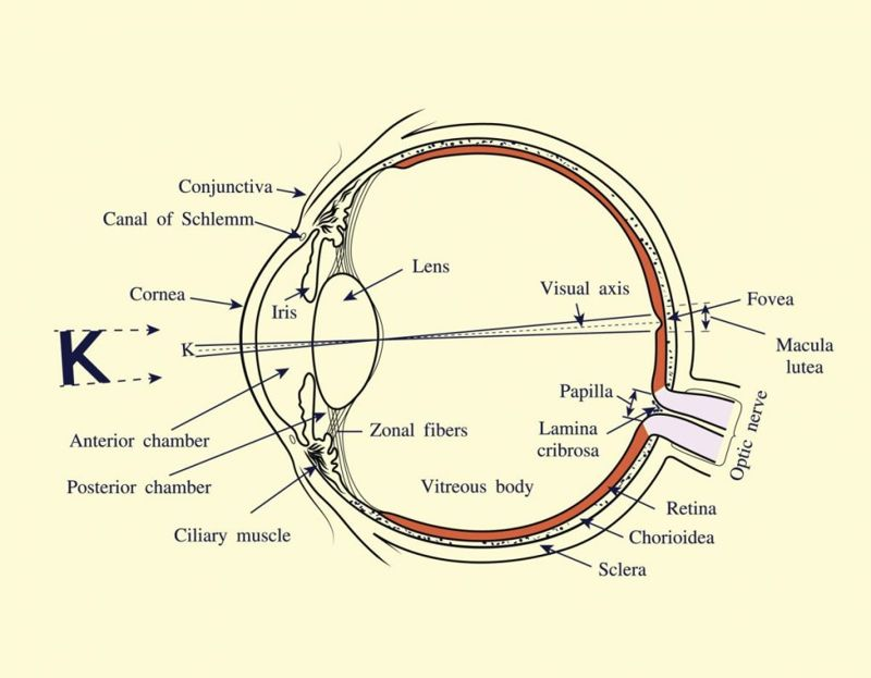what are the parts of the eye