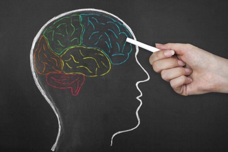 hemisphere brain