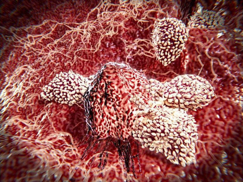 compartmentalization bone marrow