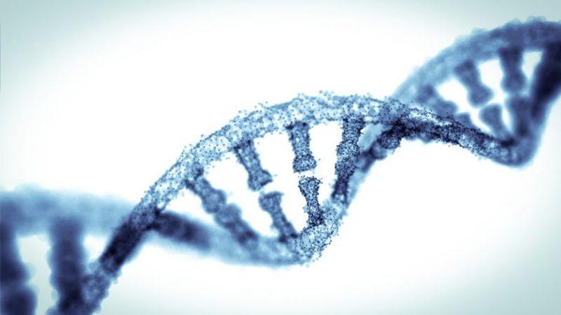 genetics hormones