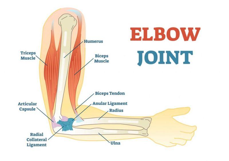 arms hand bone