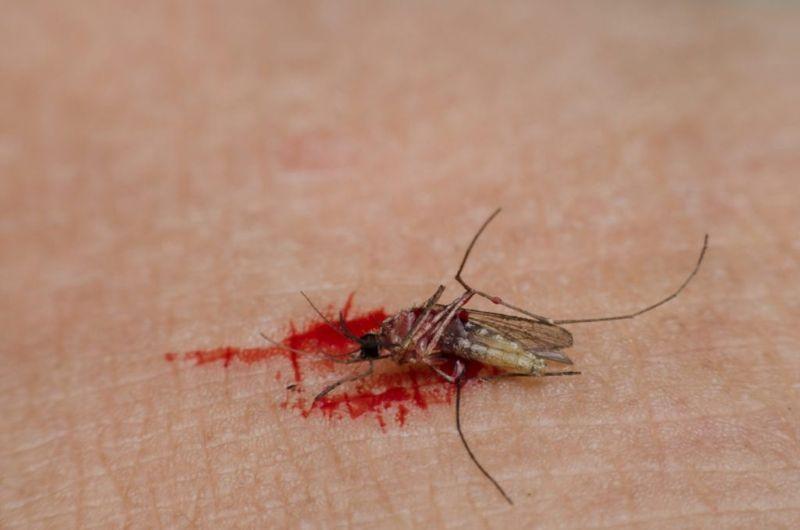 risks Chikungunya