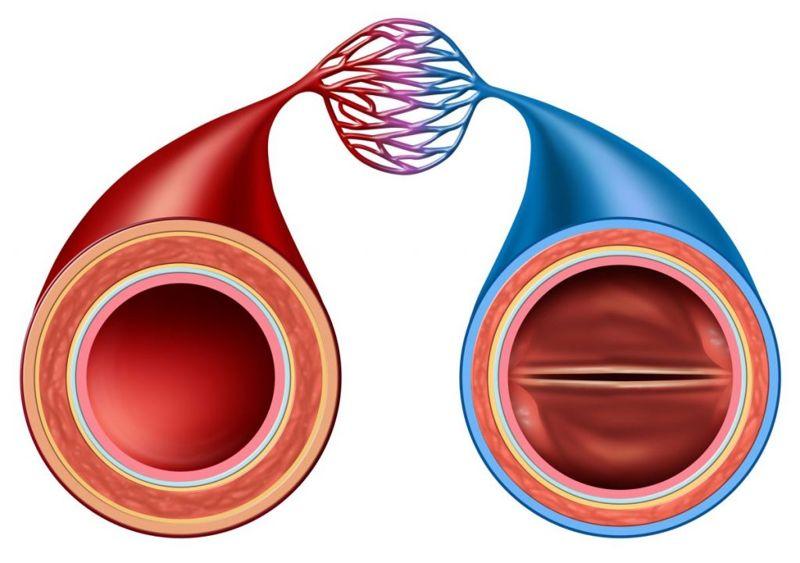 arterioles artery